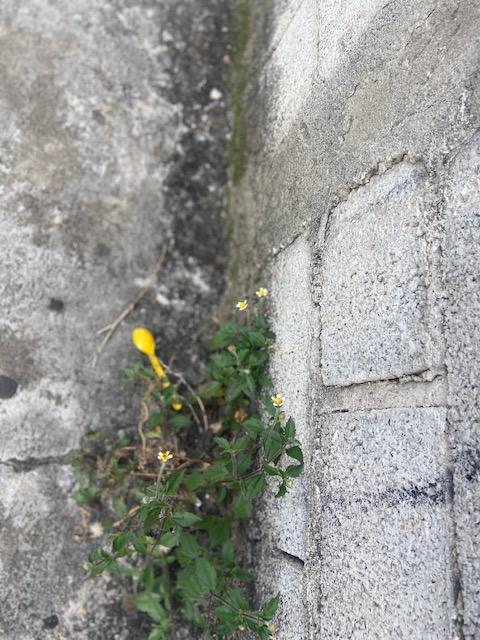 Série: Jardim das Delícias –25