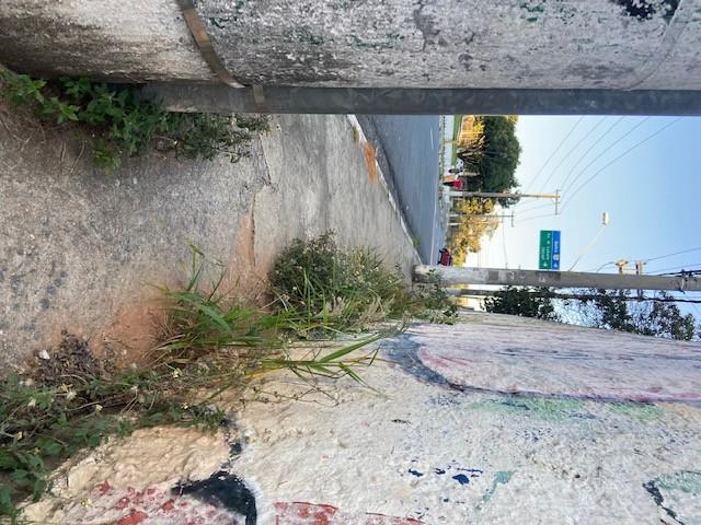 Jardim das Delícias - 39, Justino, 2020.